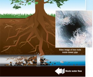 tree-root-sewer-line